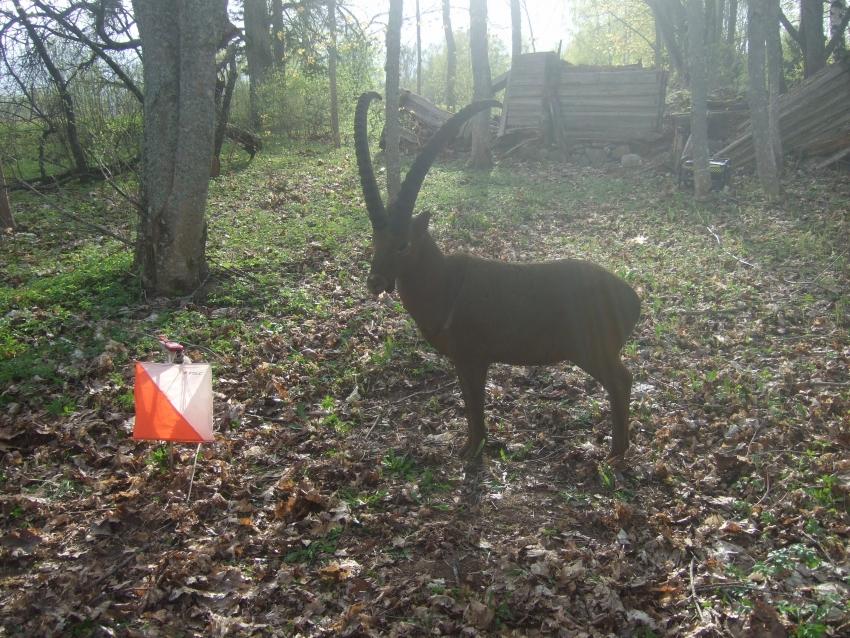 """AZIMUTA orientēšanās treniņi: """"Uz veselību caur mežu""""."""
